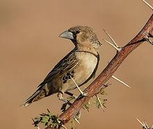 about-bird-1.jpg