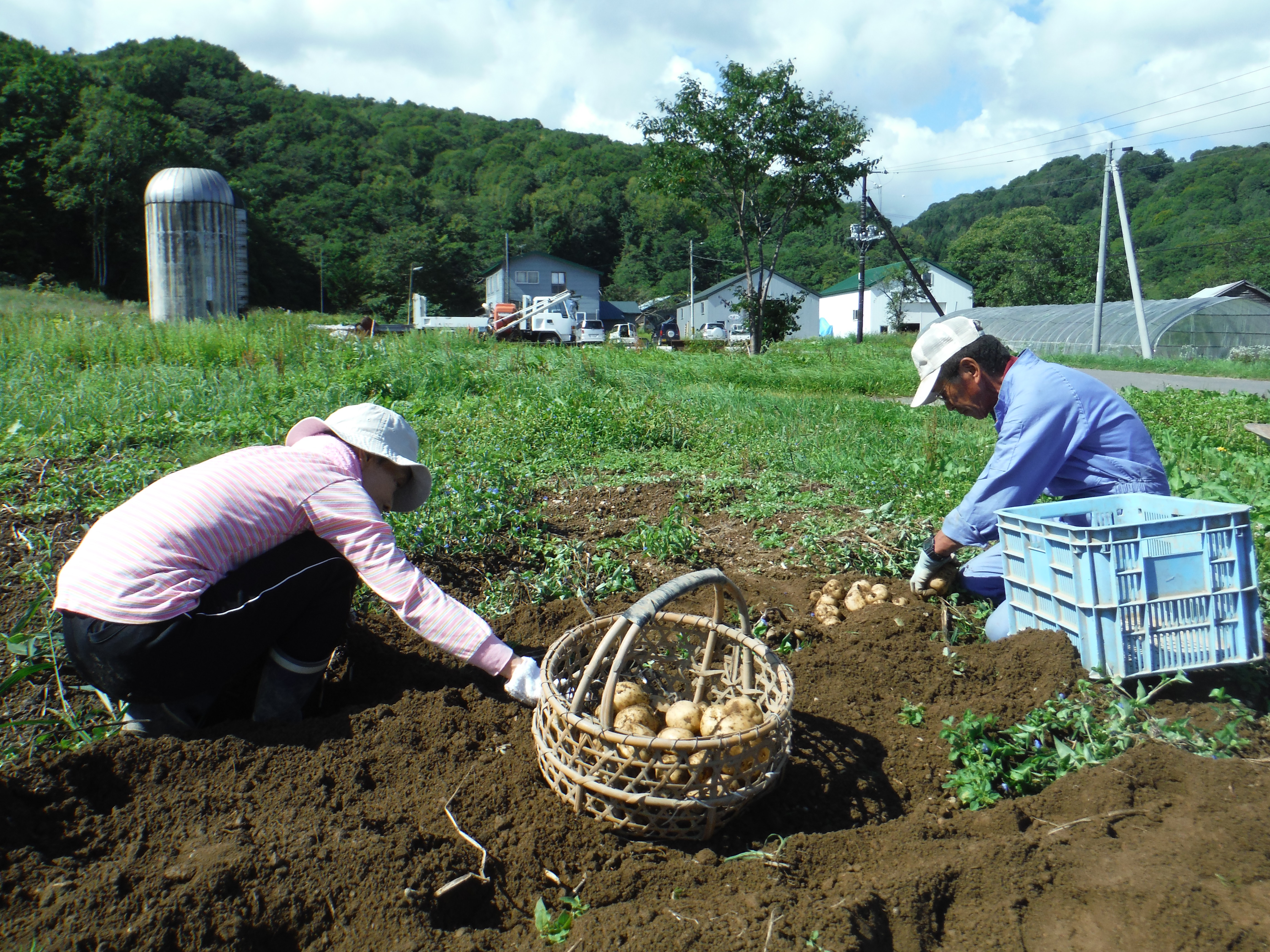 ジャガイモ収穫体験 毎年9月