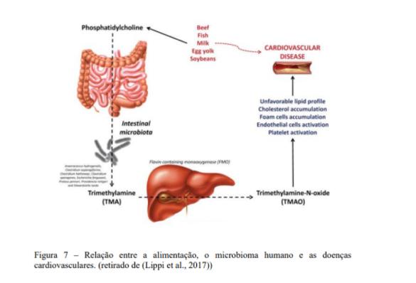 Relação entre a alimentação, o microbioma humano e as doenças cardiovasculares.