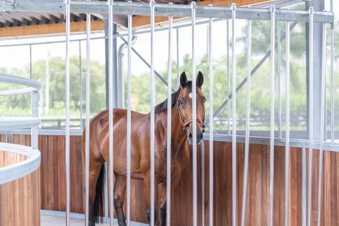 Safeguard pusher gates