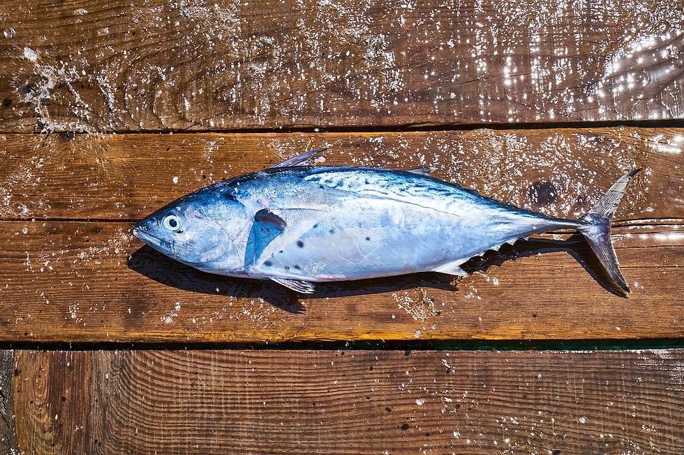 fish-3646492_1280.jpg