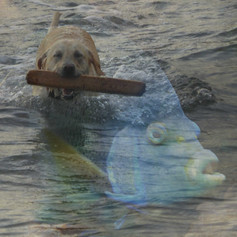 schwimmhundmitfisch.jpg