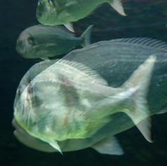 doppelfische.jpg