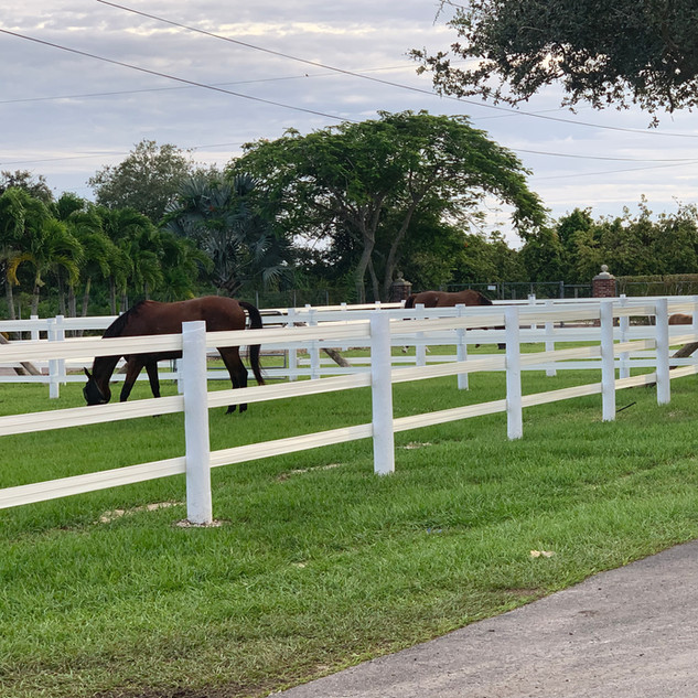 Oatmeal and Cookie enjoying one of our large turnout fields.
