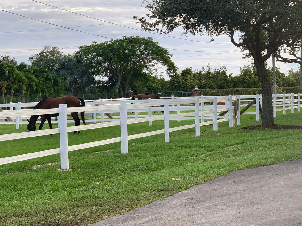 """We offer a """"rustic"""" feel, with well maintained horse pastures, oak trees, and best of all : Horses!"""