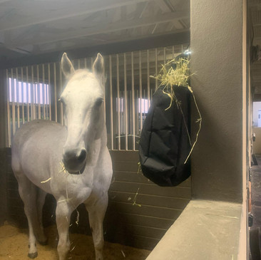 Our lesson horse, Andy, enjoying his hay net.