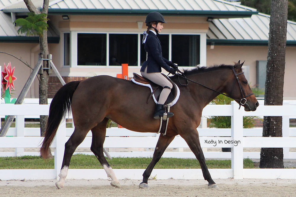 horse showing, show stables,