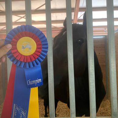 Oatmeal won his class at the horse show!