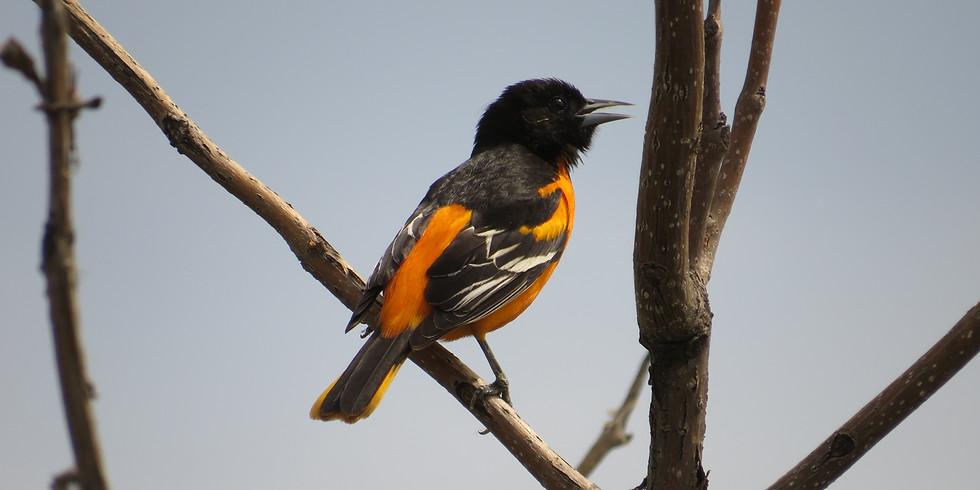 First Thursday - Birding Basics