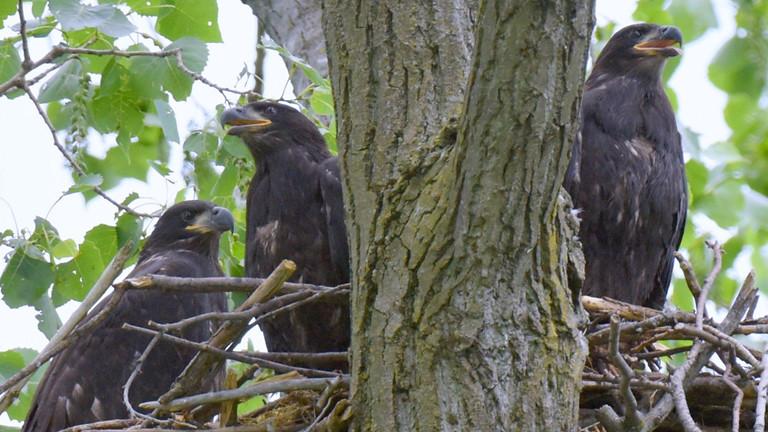 Audubon's Baltimore Birding Event at Masonville Cove