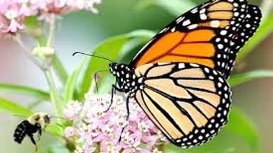 First Thursday - Pollinator's Paradise
