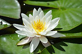 nature-blossom-plant-white-leaf-flower-1