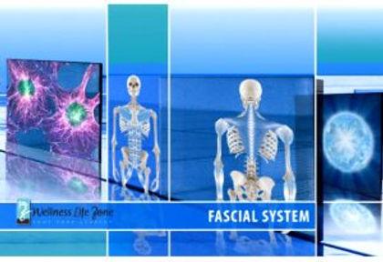 facialsystem-300x206.jpg