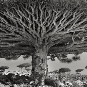 Ha ritratto gli esseri viventi più antichi del mondo: intervista a Beth Moon