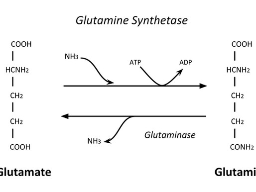 Patent Analysis: Memphis Meats and Glutamine Synthetase