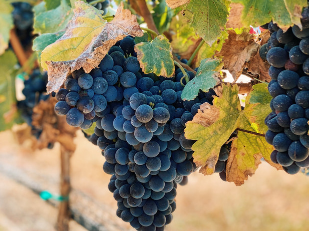 """Wines to """"fall"""" in love with for Autumn"""