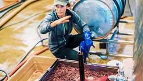 Women In Wine   A.Rafanelli Winery