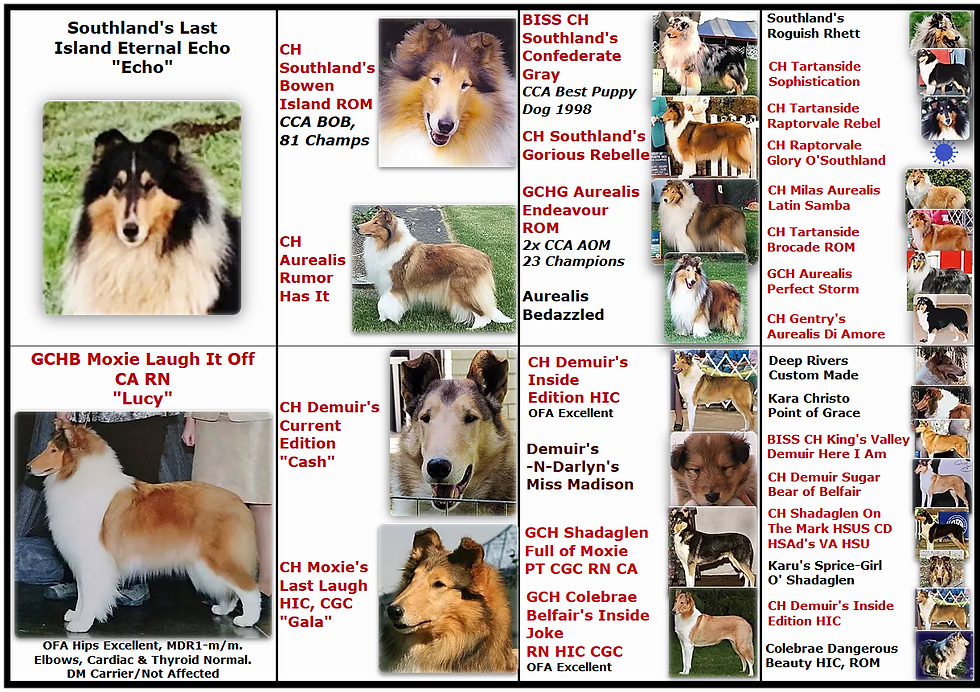 Lucy Echo Pups April 2020 white border.p