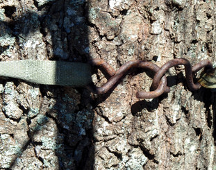Tree in Chains