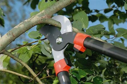 Tree Trimming / Pruning