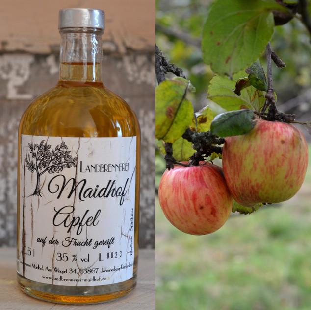 Apfel auf der Frucht gereift