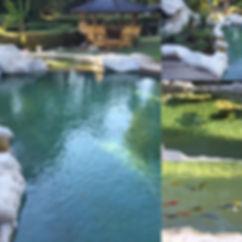 bassin naturel atelier piscines