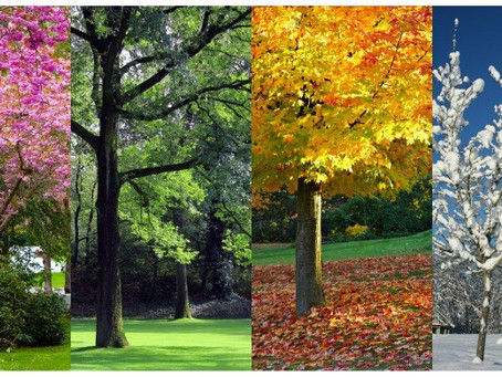 Estate Planning for the Seasons