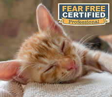 Cat Sitting, Pet Sitting, Fear Free Professional