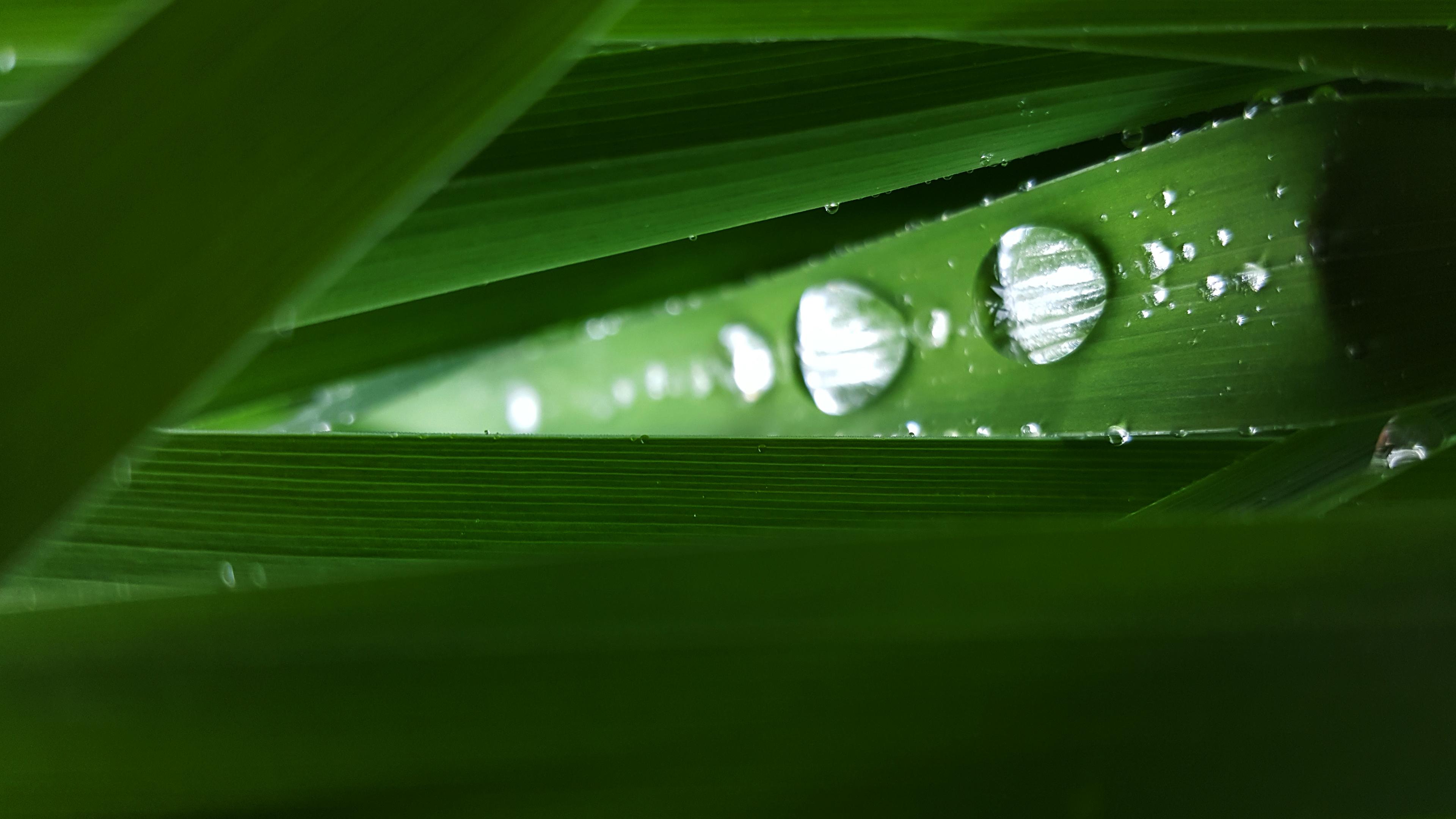 green drop2