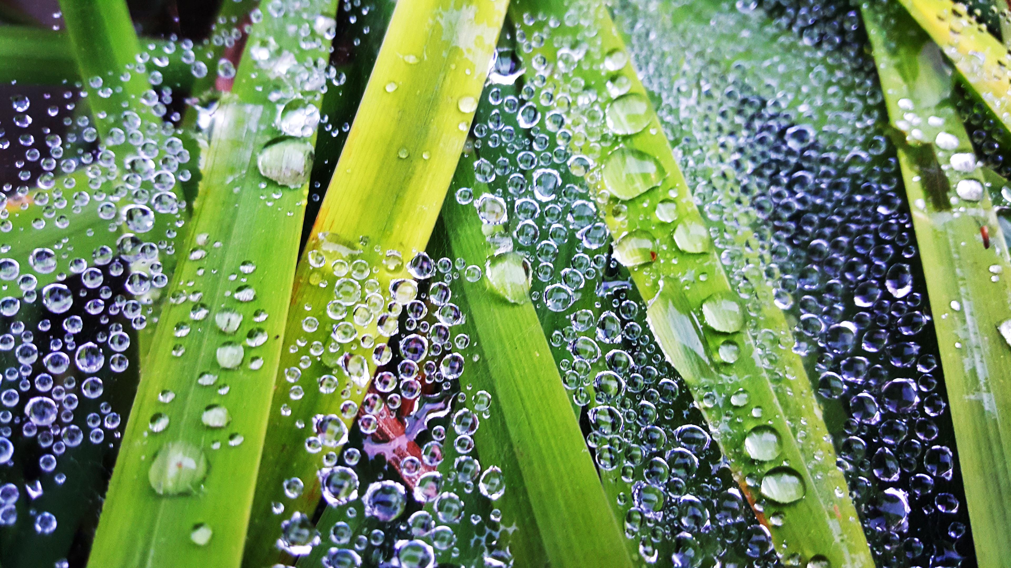 rain drop2
