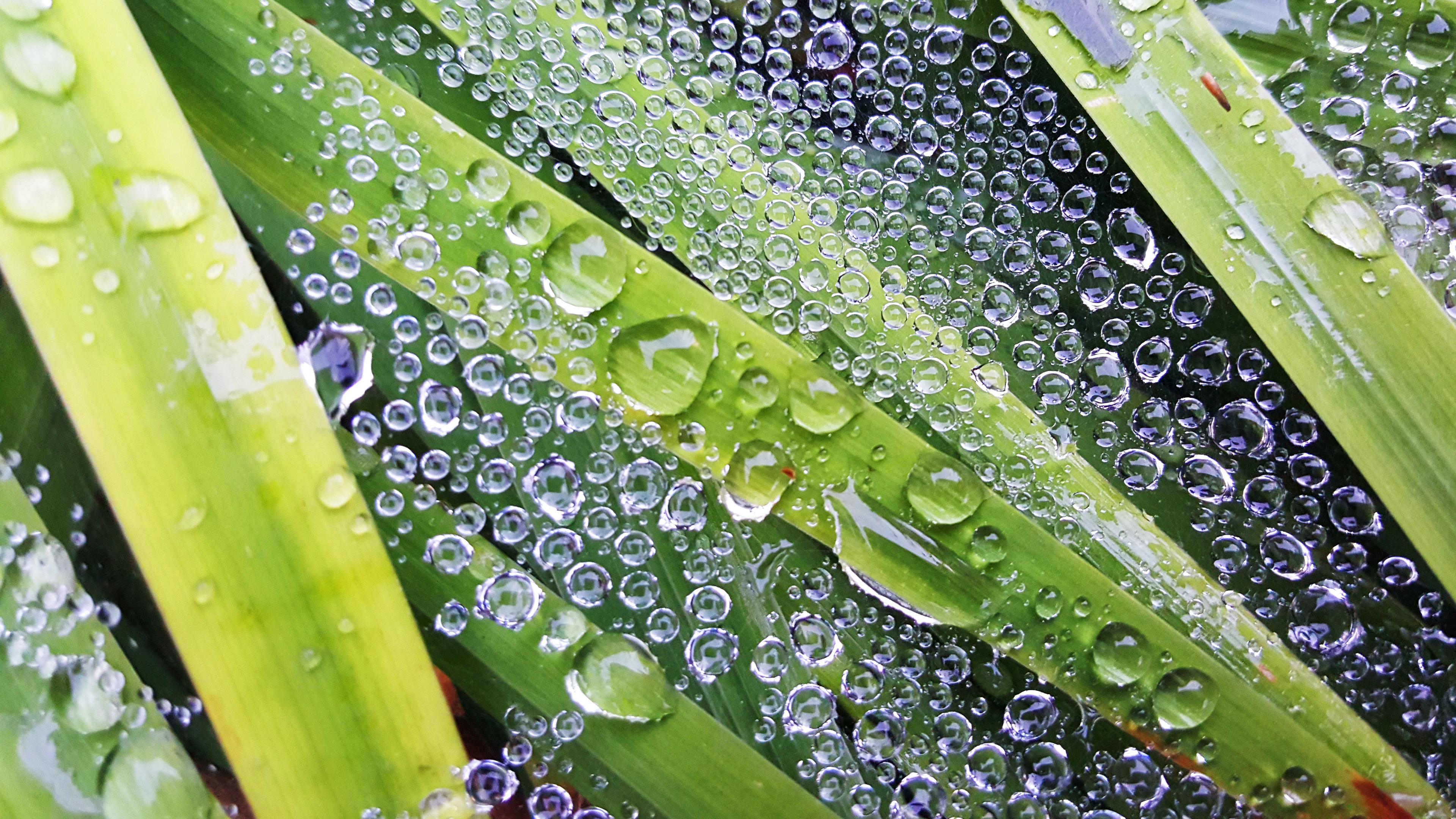 rain drop1