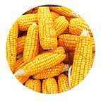 Corn Circle v2.png