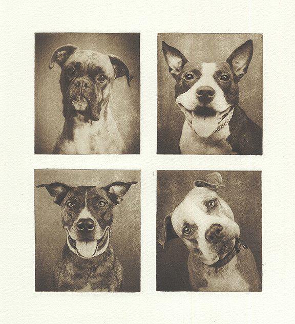 four dogs.jpg