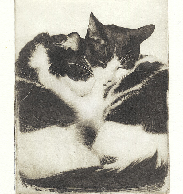 cat cuddle for web.jpg