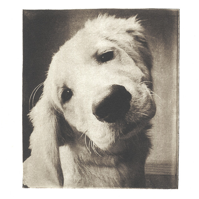 dog portrait.jpg