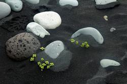 flowers in lava-web.jpg