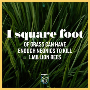 Bigger Than Bees: Neonic Pesticides Found to Cause Ecosystem-Wide Harms