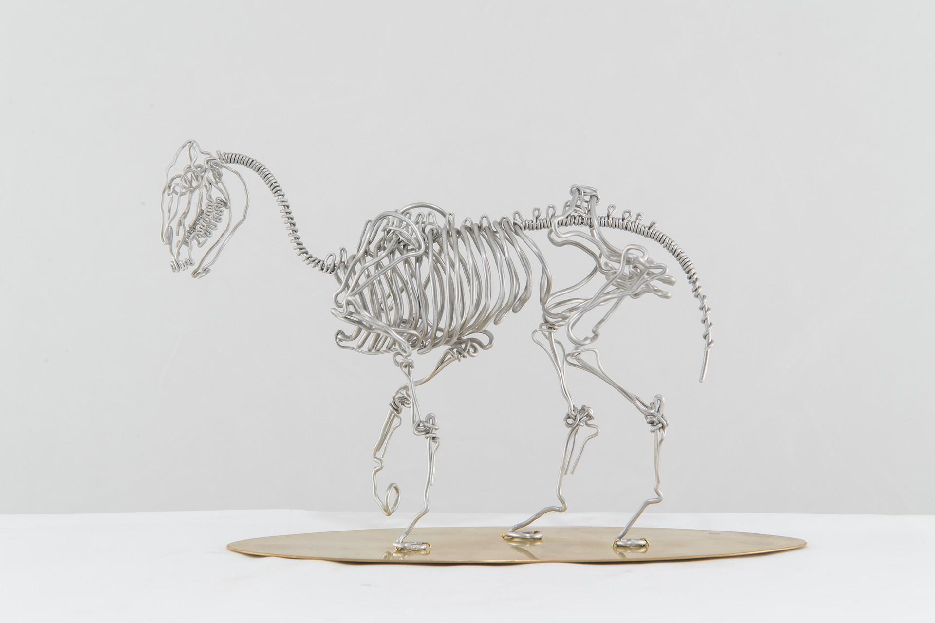 馬骨/Horse Skeleton