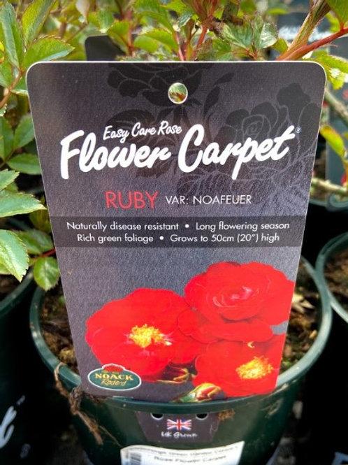 Rose Flower Carpet Ruby
