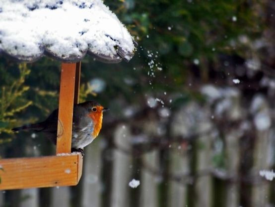 Robin Snow.jpg