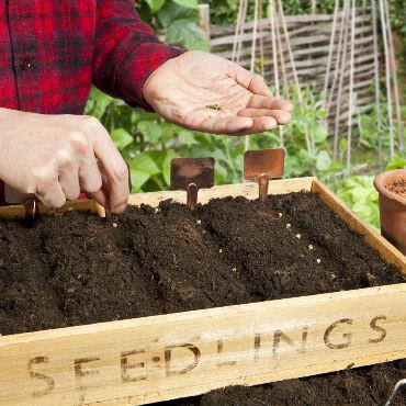Sow-Seeds-image.jpg