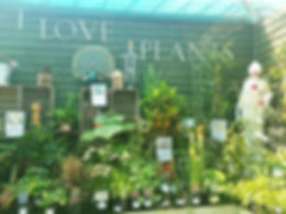 stansted i love plants.jpg