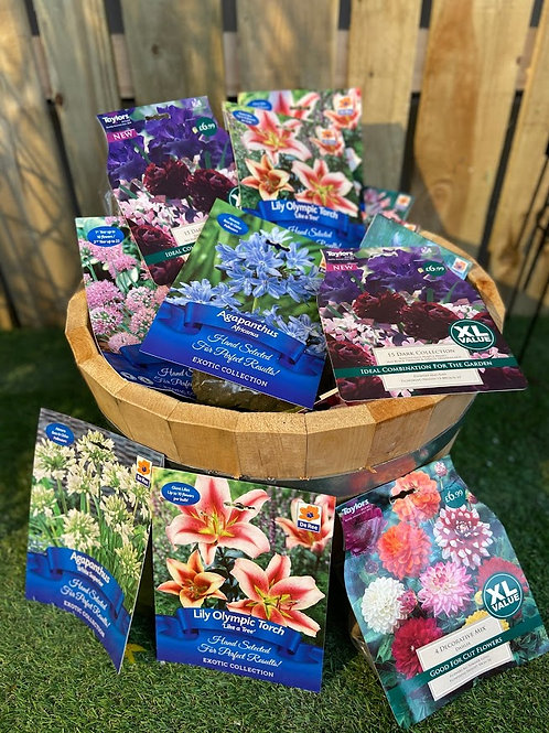 Our Selection of summer Bulbs