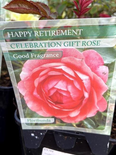 Rose Celebration 'Happy Retirement'