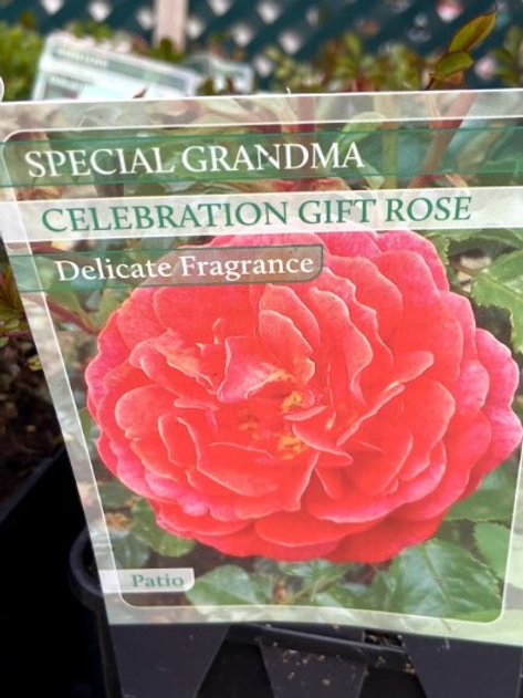 Rose Celebration 'Special Grandma'