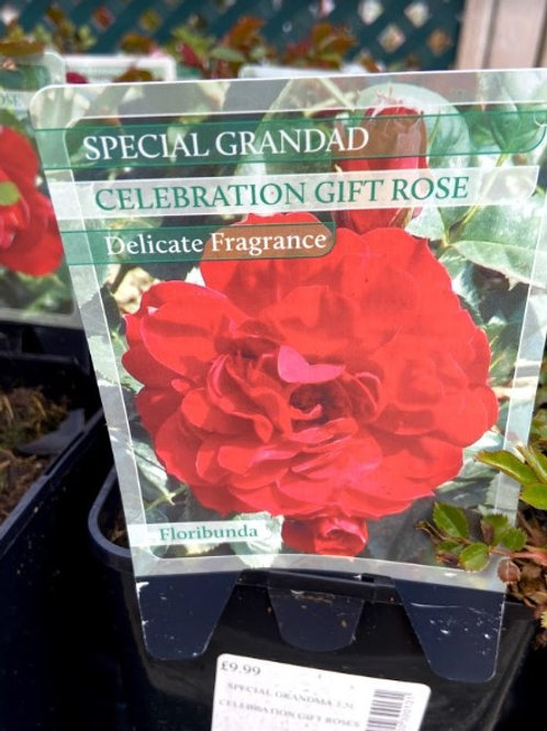 Rose Celebration 'Special Grandad'