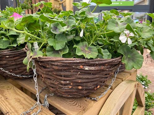 Medium hanging baskets