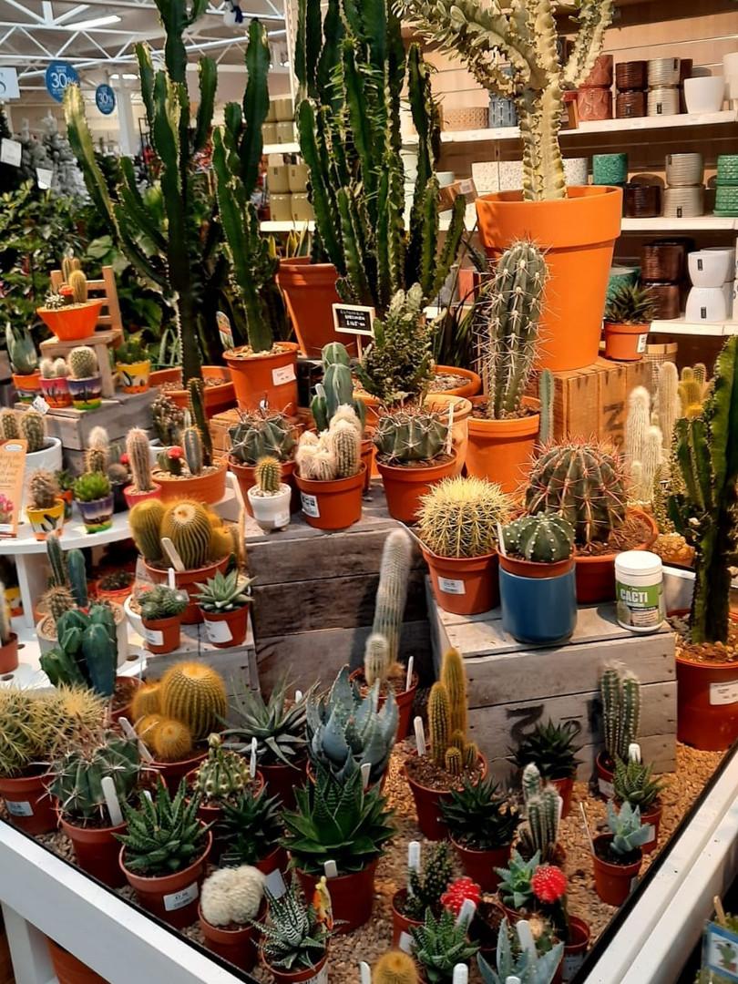 SPGC Cacti 2.jpeg