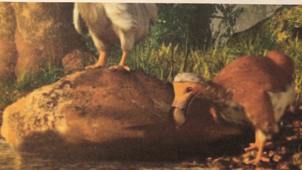 Bryce's Clumsy Dodo Bird Project