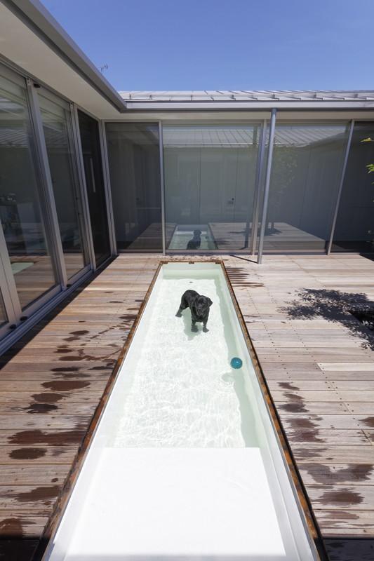 犬と暮らす家-プール0101